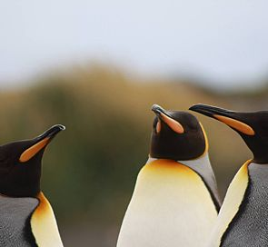 Do you want to see Penguins ?: The pinnacles of Patagonia