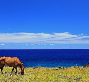 Horseback Riding on Easter Island