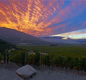 Tour de vino por el valle de Colchagua