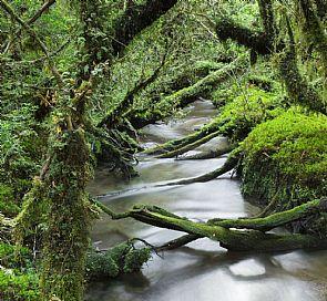 ¿Cuáles son los mejores senderos del Parque Queulat?