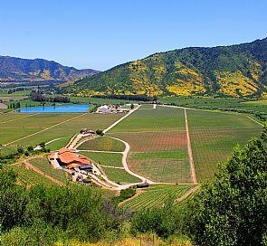 Ruta del Vino: Viña Viu Manent y Casa Silva