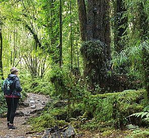 Trekking por el Parque Nacional Alerce Andino