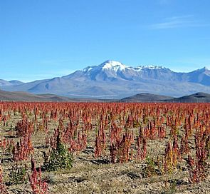 Route of the Quinoa and Giant Cactus Forest