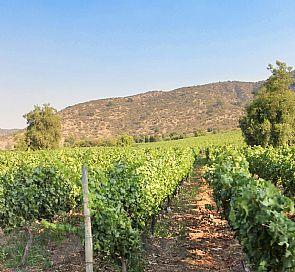 Tour pelas vinicolas Alchemysta e Castamora