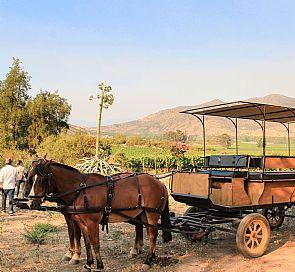 Tour por las viñas Castamora y Caven, con almuerzo en Hacienda Histórica Marchigüe