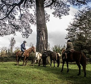 Horse ride through the Piuchén mountain range