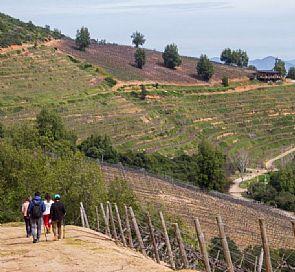 Trekking through Ventisquero vineyard