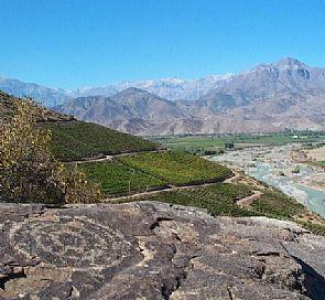 Tour through San Esteban vineyard