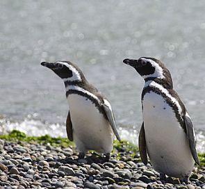 Ruta de los pingüinos y delfines en Queilen