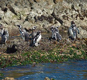 Navegación a las pingüineras de Puñihuil