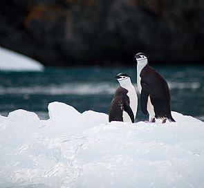 Cómo llegar al destino más exótico del mundo: La Antártica