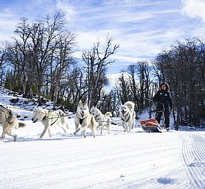 Mushing adventure with Husky dogs
