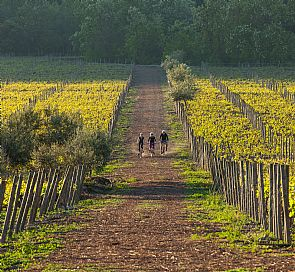 The best vineyards in the Casablanca Valley to visit this sunny season