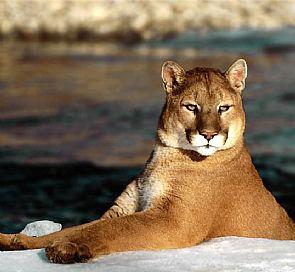 Fauna de Chile: Qué animales puedes ver en Torres del Paine y dónde buscarlos