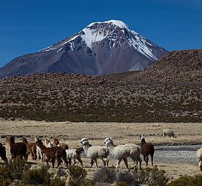 Excursion through Lauca National Park