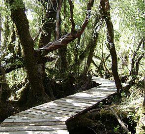 Trekking por el Parque Nacional Chiloé
