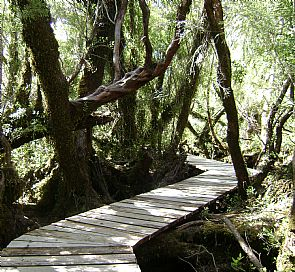 Trekking Parque Nacional Chiloé