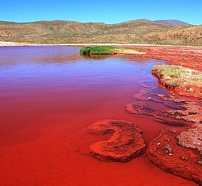 Red Lagoon Tour in Tarapacá