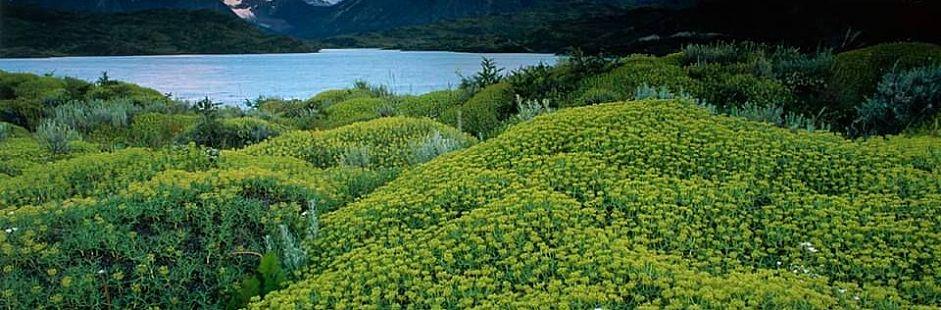 Lo mejor de Torres del Paine y Patagonia - Express - 4 días / 3 noches