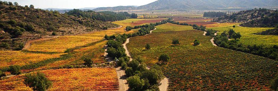 Tour de vino en Valle Casablanca