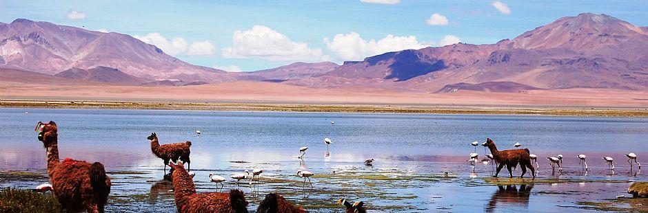 Lo mejor de San Pedro de Atacama - Perfecto - 5 días / 4 noches