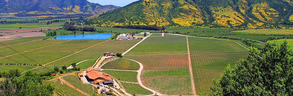 Wine Route: Viña Viu Manent and Casa Silva