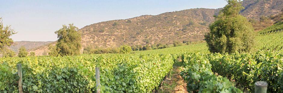 Tour through Alchemysta and Castamora vineyards