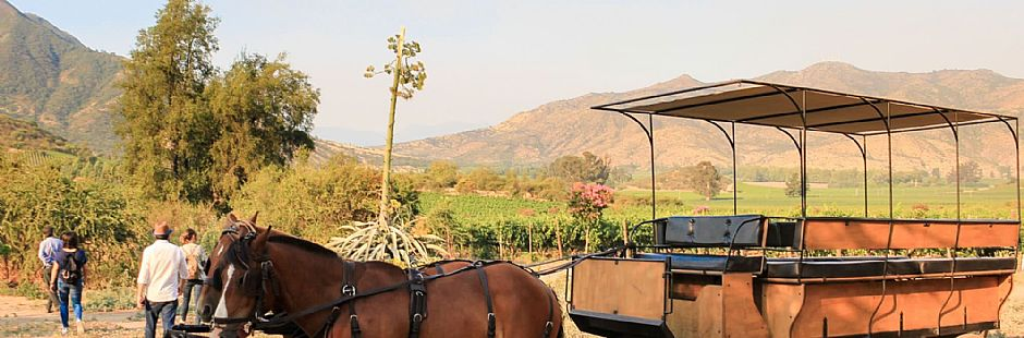 Tour through Castamora and Caven vineyards, with lunch at Hacienda Histórica Marchigüe