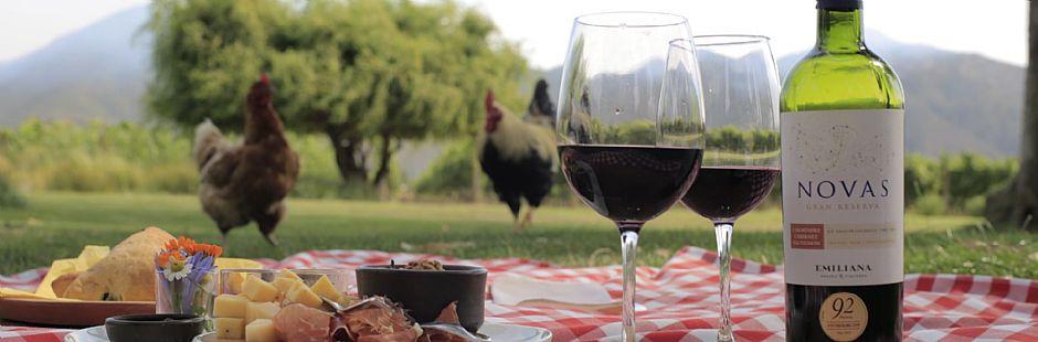Tour thgough Emiliana vineyard with wine pairing