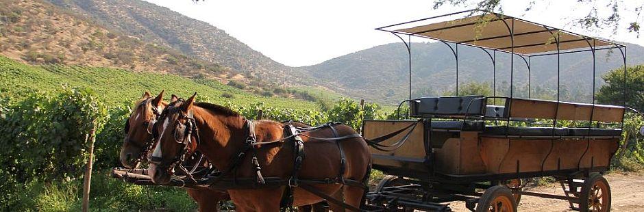 Tour por Viña Castamora con cordero al palo