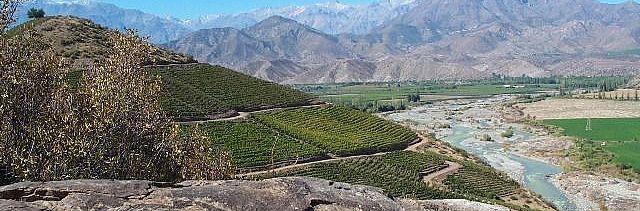 Tour through San Esteban vineyard with wine preparation