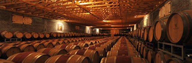 Tour through San Esteban vineyard with lunch