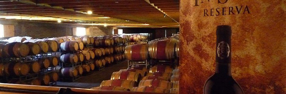 Tour and horse ride through San Esteban vineyard
