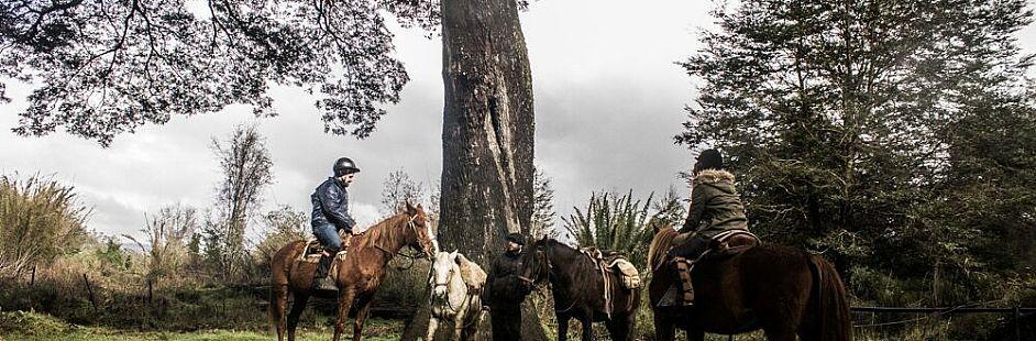 Horse ride through San Pedro's riverside