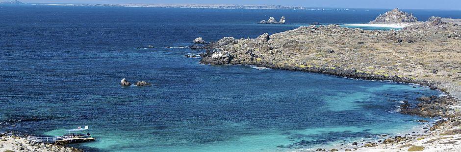 Excursión a Isla Damas y Pingüino de Humboltd