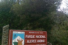 Information to visit Alerce Andino National Park