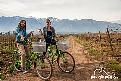 Bicycle in Cousiño Macul Vineyard